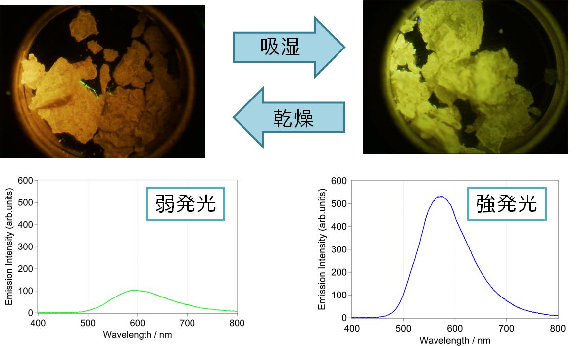 43 小分子溶媒雰囲気で強発光性が誘起される銀(I),銅(I)六核錯体 ~光る蒸気センシングマテリアル~