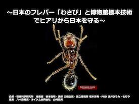 72 マイクロカプセル化わさび成分によるヒアリのコンテナ貨物侵入阻止とシリコン樹脂充填によるコンテナヤードでのヒアリ営巣阻止技術の確立と応用 〜日本のフレバー「わさび」と博物館標本技術でヒアリから日本を守る〜