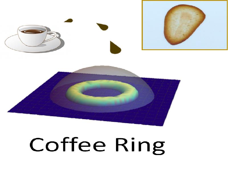 16. 水滴が乾くとなぜリング状のしみができるのか? ~コーヒーリング形成の新観測手段とナノテクロジーへの応用~