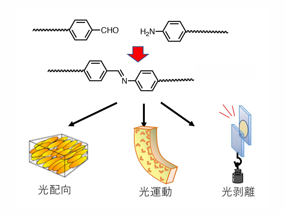 28. 光反応性高分子液晶を用いた機能性材料