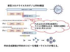 14 新型コロナウイルス増殖阻害剤開発 ~新規の作用機序でウイルス増殖を抑える化合物の探索~