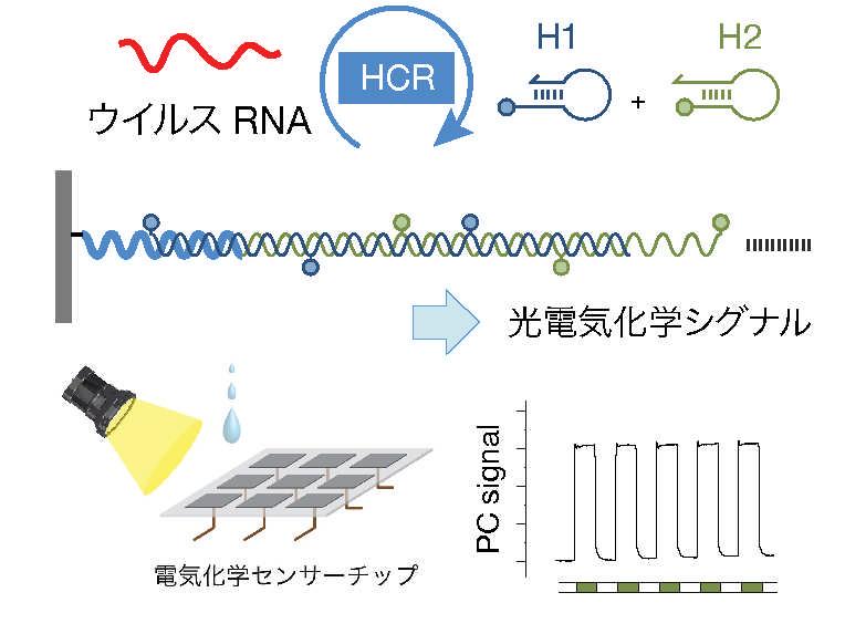 22 等温増幅法による新型コロナウイルス迅速検査技術の開発 ~PCR検査よりも速くて簡単な分析技術の実現を目指して~