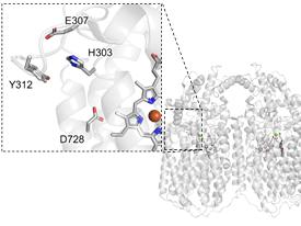 66 髄膜炎菌の感染増殖に必須の酵素:一酸化窒素還元酵素 〜構造、機能とその阻害〜