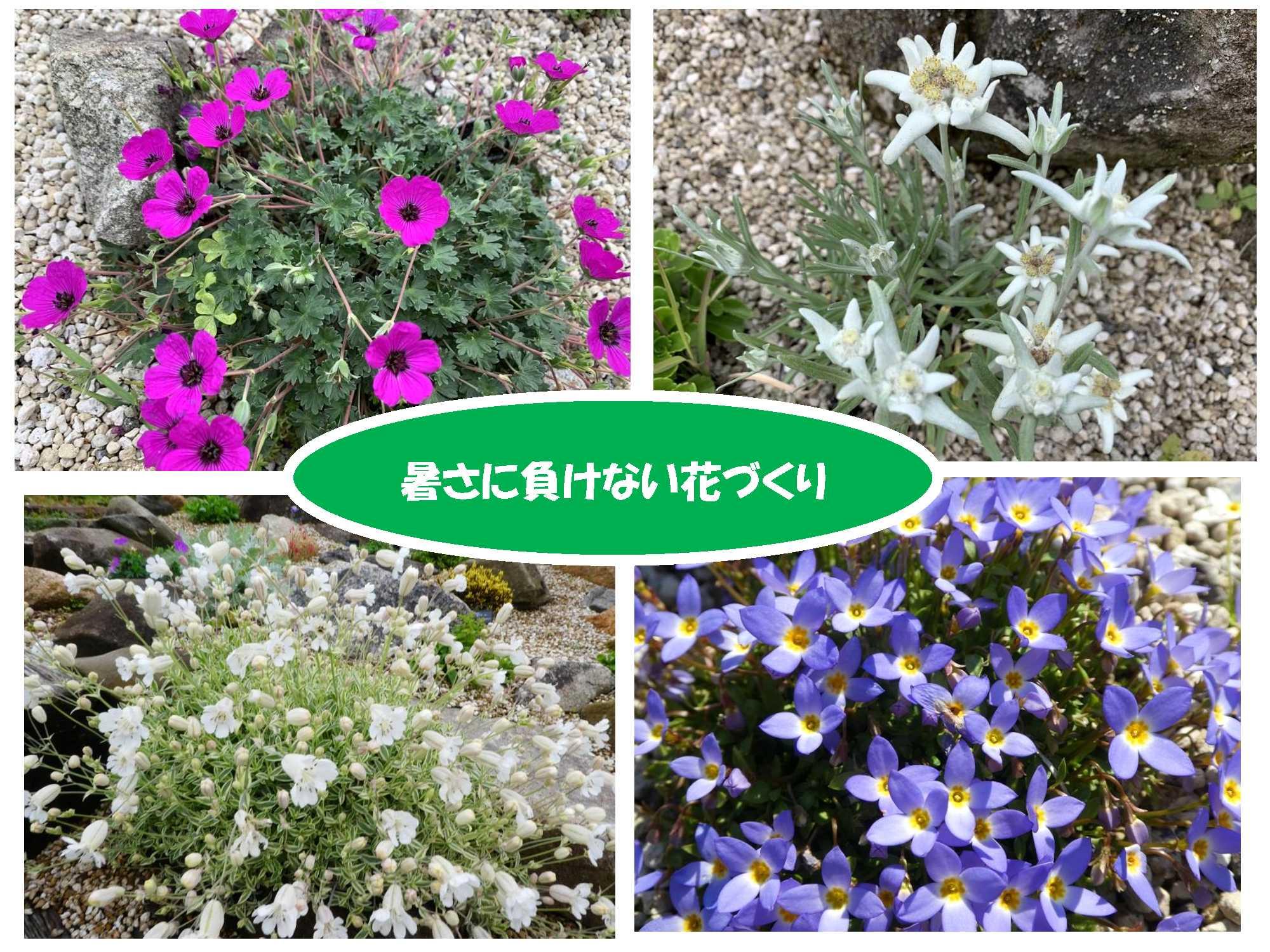 36. 温暖地において気候変動に対応できる効果的な植物栽培環境の提案